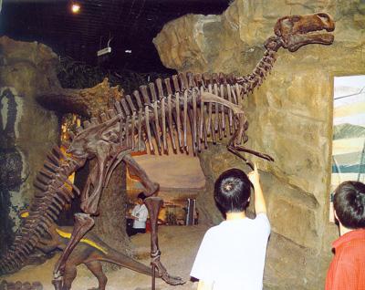 煤矿井下发现的禽龙骨骼化石